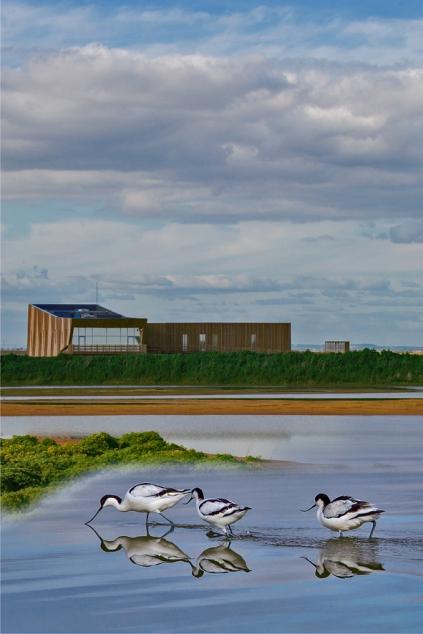Foto de Vítor Manike para o EVOA, espaço de Visitação e Observação de Aves