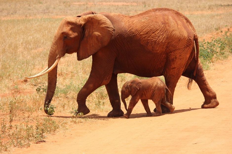 elephant-175798_960_720[1]