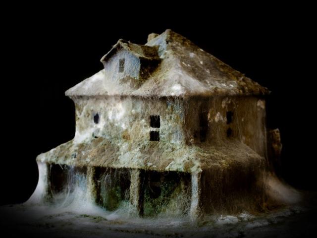 del_nero_mold_house